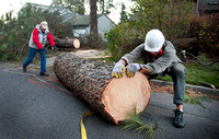 ROD FULLER, RON VALLEY REMOVE PINE TREE
