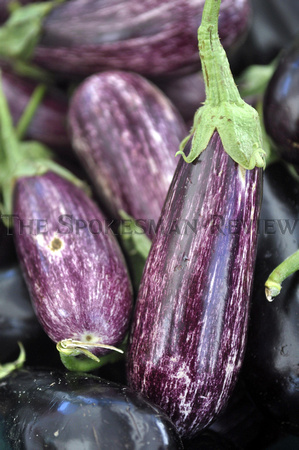 JUST PICKED EGGPLANT
