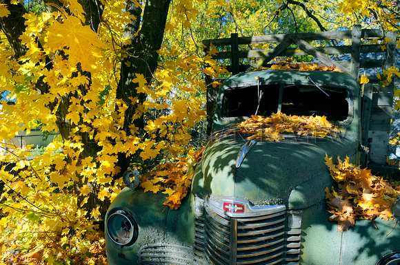 TRUCK COVERED WITH AUTUMN LEAVES